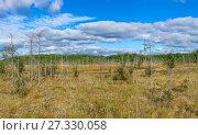 Купить «Болото в северной Карелии, панорама», фото № 27330058, снято 4 сентября 2011 г. (c) Кекяляйнен Андрей / Фотобанк Лори