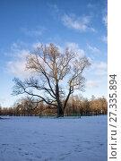 Купить «Old Oak in Gatchina Park», фото № 27335894, снято 21 января 2017 г. (c) Юлия Бабкина / Фотобанк Лори
