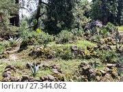 Купить «Cactus plantation in garden», фото № 27344062, снято 12 июля 2013 г. (c) Евгений Ткачёв / Фотобанк Лори