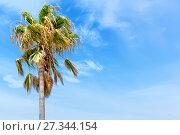 Купить «Coconut palm tree in Seychelles. Space for text», фото № 27344154, снято 25 июля 2015 г. (c) Евгений Ткачёв / Фотобанк Лори