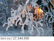 Купить «Ветка, покрытая инеем в лучах заходящего солнца. Пылающий взор», фото № 27344990, снято 19 января 2010 г. (c) Юрий Кирсанов / Фотобанк Лори