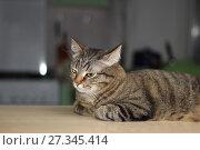 Купить «Кот на подоконнике», фото № 27345414, снято 14 декабря 2017 г. (c) Валерий Денисов / Фотобанк Лори