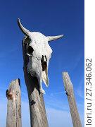Купить «Череп коровы на доске старого забора», эксклюзивное фото № 27346062, снято 12 декабря 2017 г. (c) Алексей Гусев / Фотобанк Лори