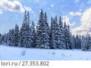Spruce forest in winter. Winter landscape. Стоковое фото, фотограф Евгений Ткачёв / Фотобанк Лори