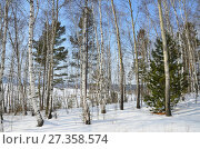 Купить «Зимний сибирский лес в облачный день», фото № 27358574, снято 2 марта 2017 г. (c) Овчинникова Ирина / Фотобанк Лори