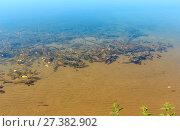 Купить «Summer lake sandy bottom with algae», фото № 27382902, снято 1 сентября 2017 г. (c) Юрий Брыкайло / Фотобанк Лори