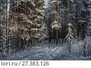 Купить «Тишина в хвойном лесу. Зимний пейзаж», фото № 27383126, снято 8 января 2018 г. (c) Наталья Осипова / Фотобанк Лори
