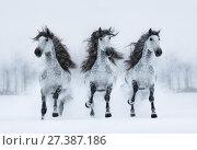Купить «Три серых длинногривых коня скачут по снегу», фото № 27387186, снято 25 декабря 2017 г. (c) Абрамова Ксения / Фотобанк Лори