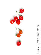 Купить «Cherry tomatoes (mini) on a branch on a clean white background. Isolated.», фото № 27390210, снято 14 января 2018 г. (c) Olesya Tseytlin / Фотобанк Лори