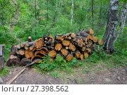 Купить «Дрова из валежника в лесу, поленница», фото № 27398562, снято 11 июля 2017 г. (c) Геннадий Соловьев / Фотобанк Лори