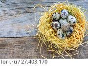 Купить «Motley quail eggs in the nest», фото № 27403170, снято 5 января 2017 г. (c) Марина Сапрунова / Фотобанк Лори