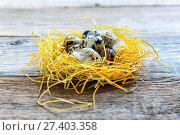 Купить «Nest with colorful quail eggs», фото № 27403358, снято 5 января 2017 г. (c) Марина Сапрунова / Фотобанк Лори