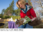 Becky Priestley, Wildlife Officer with Trees for Life, carrying out health checks on Red squirrels (Sciurus vulgaris) trapped as part of reintroduction... Редакционное фото, фотограф SCOTLAND: The Big Picture / Nature Picture Library / Фотобанк Лори