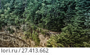 Купить «Forest on the edge of the void», фото № 27413662, снято 24 августа 2019 г. (c) Wavebreak Media / Фотобанк Лори
