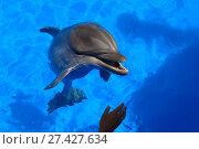 Купить «Веселый дельфин плавает в голубой воде», фото № 27427634, снято 30 июля 2014 г. (c) Акоп Васильян / Фотобанк Лори