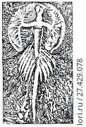Купить «Burgessia bella Walcott. Ископаемые организмы», иллюстрация № 27429078 (c) Макаров Алексей / Фотобанк Лори