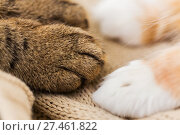 Купить «close up of paws of two cats on blanket», фото № 27461822, снято 15 ноября 2017 г. (c) Syda Productions / Фотобанк Лори