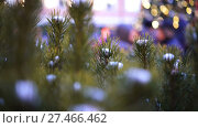 Купить «Spruce branches with snow on the tops, New Years lights and people on background», видеоролик № 27466462, снято 14 января 2018 г. (c) Ирина Мойсеева / Фотобанк Лори