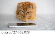 Купить «Red-haired kitten plays on smartphone with a computer game mouse», видеоролик № 27468078, снято 2 января 2018 г. (c) Володина Ольга / Фотобанк Лори