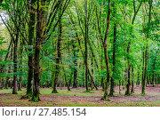 Tree trunks in green mossy forest. Стоковое фото, фотограф Zoonar/A.Flašker / age Fotostock / Фотобанк Лори