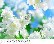 Купить «Бабочка на цветах жасмина», фото № 27505242, снято 19 июня 2016 г. (c) Икан Леонид / Фотобанк Лори
