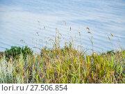 Купить «Трава на берегу Таганрогского залива в Ростовской области», фото № 27506854, снято 16 июля 2015 г. (c) Алёшина Оксана / Фотобанк Лори