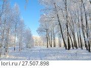 Купить «Берёзовая роща в инее в солнечный день, красивый зимний пейзаж», фото № 27507898, снято 24 января 2018 г. (c) Ольга Коцюба / Фотобанк Лори