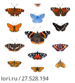 Купить «Большой набор европейских бабочек изолированно на белом. Углокрыльница, глазок цветочный, голубянка, павлиний глаз, червонец огненный, адмирал, пестрокрыльница изменчивая, переливница ивовая, медведица госпожа, крапивница, червонец огненный, перламутровка Аглая, толстоголовка лесовик», фото № 27528194, снято 17 сентября 2017 г. (c) Анастасия Некрасова / Фотобанк Лори