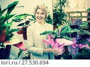 Купить «Cheerful mature blond woman selecting flowers», фото № 27530694, снято 27 мая 2020 г. (c) Яков Филимонов / Фотобанк Лори