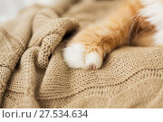 Купить «close up of red cat paw on knitted blanket», фото № 27534634, снято 15 ноября 2017 г. (c) Syda Productions / Фотобанк Лори
