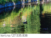 Купить «Small summer lake surface with green reflections», фото № 27535838, снято 30 июля 2017 г. (c) Юрий Брыкайло / Фотобанк Лори