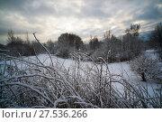 Купить «Gloomy weather in the winter forest», фото № 27536266, снято 28 января 2018 г. (c) Алексей Маринченко / Фотобанк Лори