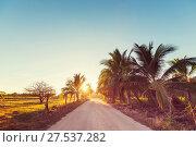 Купить «Road in jungle», фото № 27537282, снято 13 октября 2019 г. (c) easy Fotostock / Фотобанк Лори