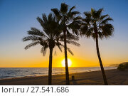 Palm trees at sunset. El Cenicero beach, El Morche, Torrox coast. La Axarquia, Malaga province. Costa del Sol, Andalusia. Southern Spain Europe. Стоковое фото, фотограф Jerónimo Alba / age Fotostock / Фотобанк Лори