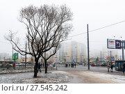 Купить «Санкт-Петербург. Оттепель. Два дерева», эксклюзивное фото № 27545242, снято 28 января 2017 г. (c) Александр Щепин / Фотобанк Лори