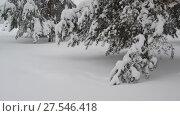 Купить «Fragment of spruce forest during a snowfall», видеоролик № 27546418, снято 4 февраля 2018 г. (c) Володина Ольга / Фотобанк Лори