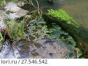 Купить «Тина в реке», эксклюзивное фото № 27546542, снято 20 августа 2017 г. (c) Анатолий Матвейчук / Фотобанк Лори