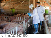 Купить «Veterinarians are going to make injection in sty», фото № 27547150, снято 16 октября 2018 г. (c) Яков Филимонов / Фотобанк Лори