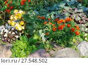 Купить «Садовые цветы на дачной клумбе», эксклюзивное фото № 27548502, снято 20 августа 2017 г. (c) Елена Коромыслова / Фотобанк Лори