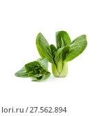 Купить «Chinese cabbage Pak-choi (salad) on a clean white background. Isolated.», фото № 27562894, снято 4 февраля 2018 г. (c) Olesya Tseytlin / Фотобанк Лори