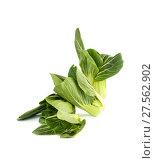 Купить «Salad Pak-choi (Chinese cabbage) on a clean white background. Isolated.», фото № 27562902, снято 4 февраля 2018 г. (c) Olesya Tseytlin / Фотобанк Лори