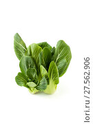 Купить «Cabbage Pak-choi (salad) on a clean white background. View from above.», фото № 27562906, снято 4 февраля 2018 г. (c) Olesya Tseytlin / Фотобанк Лори