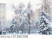 Купить «Последствия сильного снегопада. Заснеженные автомобили, дороги и деревья в Москве», фото № 27565590, снято 6 февраля 2018 г. (c) Алёшина Оксана / Фотобанк Лори