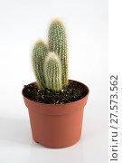 Купить «Cactus in pot on white background.», фото № 27573562, снято 3 февраля 2018 г. (c) Володина Ольга / Фотобанк Лори