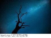 Купить «Milky way over  Oak tree (Quercus robur) Brecon Beacons National Park, International Dark Sky Preserve, Wales, UK, August 2017.», фото № 27573678, снято 21 мая 2018 г. (c) Nature Picture Library / Фотобанк Лори