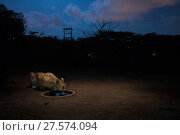 Купить «Leopard (Panthera pardus fusca)  at artificial waterhole at night. Aarey Milk Colony in unofficial buffer zone of Sanjay Gandhi National Park, Mumbai, India. January 2016», фото № 27574094, снято 19 февраля 2018 г. (c) Nature Picture Library / Фотобанк Лори