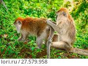 Купить «Two Macaques monkeys», фото № 27579958, снято 18 февраля 2020 г. (c) easy Fotostock / Фотобанк Лори