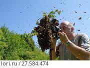 Купить «Photographer Solvin Zankl taking pictures of Honey bee (Apis mellifera) swarm. Kiel Germany, June», фото № 27584474, снято 22 июля 2018 г. (c) Nature Picture Library / Фотобанк Лори