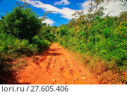 Muddy road through the jungle. Стоковое фото, фотограф Zoonar/Pawel Opaska / easy Fotostock / Фотобанк Лори