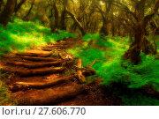Купить «Forest stairs in a Garajonay national park», фото № 27606770, снято 23 февраля 2019 г. (c) easy Fotostock / Фотобанк Лори